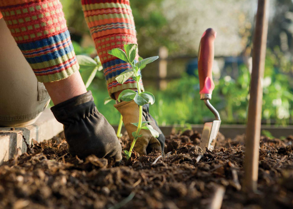 Taking Care of Your Garden